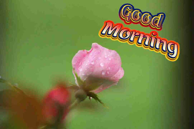nice good morning pic with pink flower