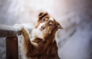 Hayvanlar Alemi Resimleri ile ilgili aramalar hayvan görselleri  ilginç hayvan resmi  hayvan resımlerı toplu  en güzel hayvanlar resmi  hayvan resmi  ödüllü hayvan fotoğrafları  komik hayvan resmi indir  komik yazılı hayvan resmi