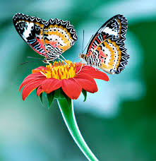 Butterflies To Remind You How Free Love Is.