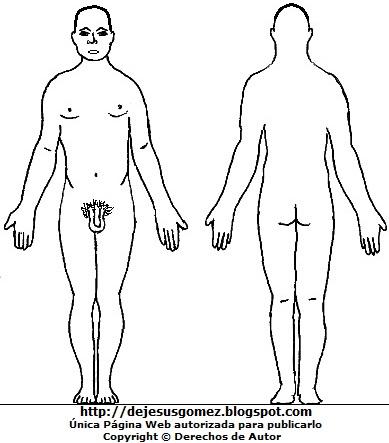 Dibujo del cuerpo humano de un hombre (Hombre desnudo) vista anterior y posterior para colorear pintar imprimir. Dibujo hecho por Jesus Gómez