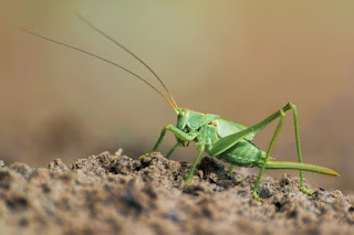 Scoffers claim the Bible has errors, often misquoting verses or taking them out of context. One claim is that Moses said grasshoppers have four legs.