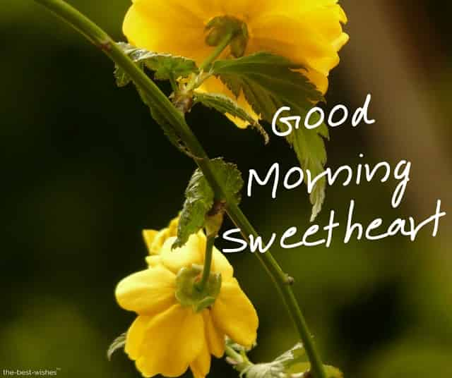 good morning sweetheart with a yellow roses