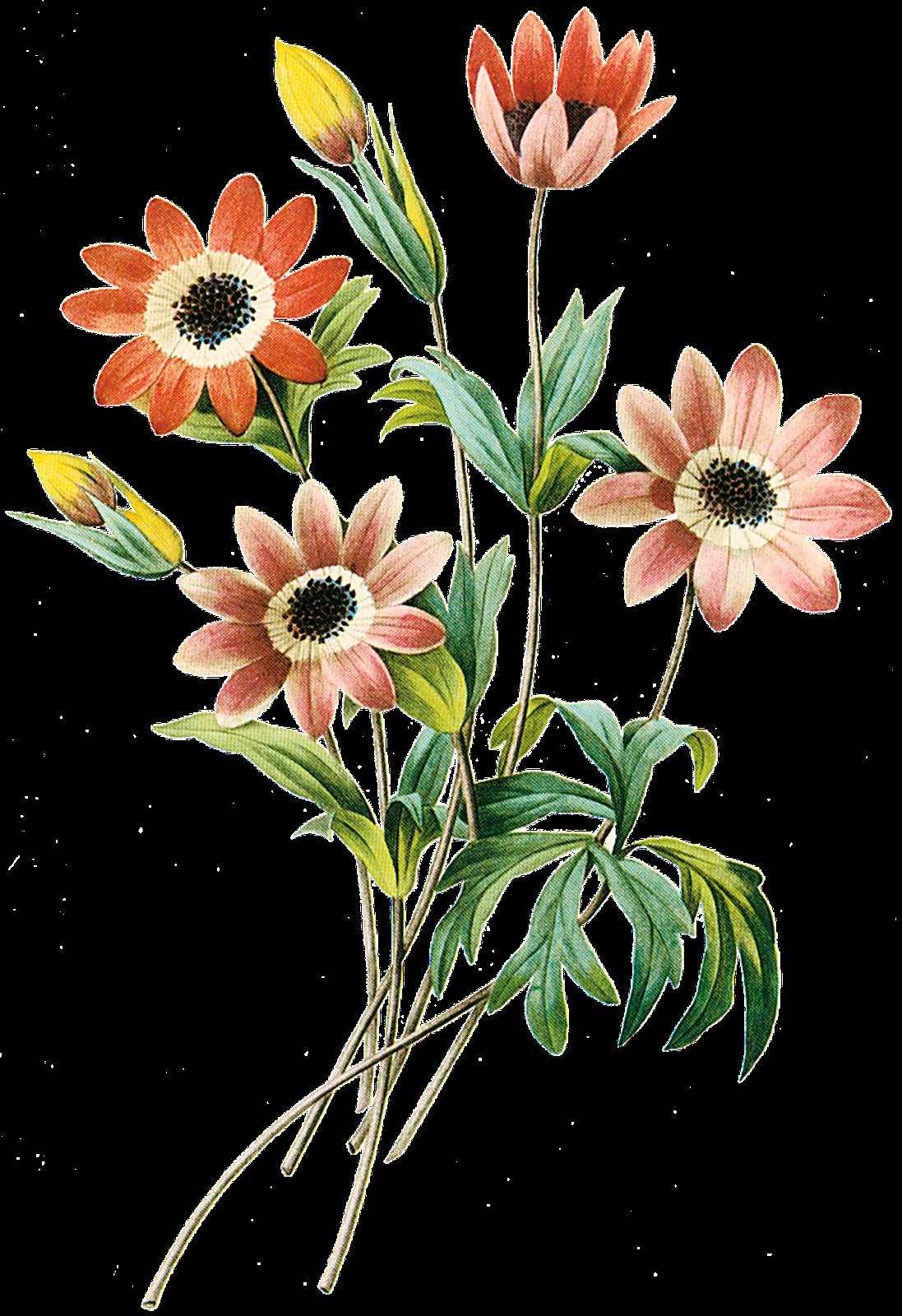 Imagens PNG - flores #2 | Imagens Png fundo transparente ...