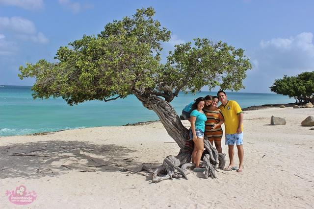 Divi-Divi árvore símbolo de Aruba