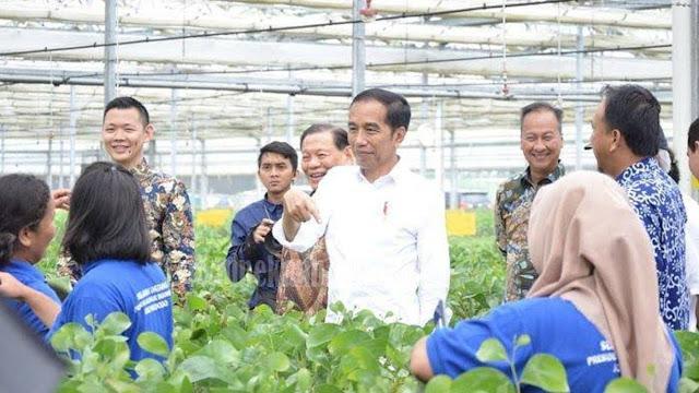 Jokowi Kaget Kayu Bisa Jadi Kain, Said Didu: Lha! Bukannya Beliau Sarjana Kehutanan?