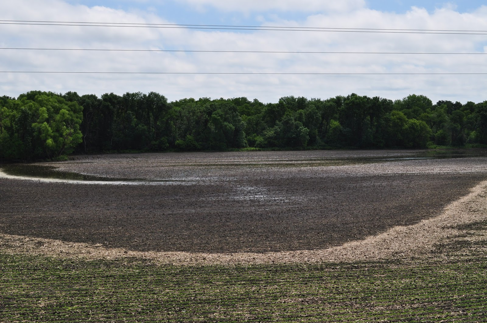 2016 minnesota crop news umn extension drowned out area of soybean field in martin county photo credit liz stahl nvjuhfo Images