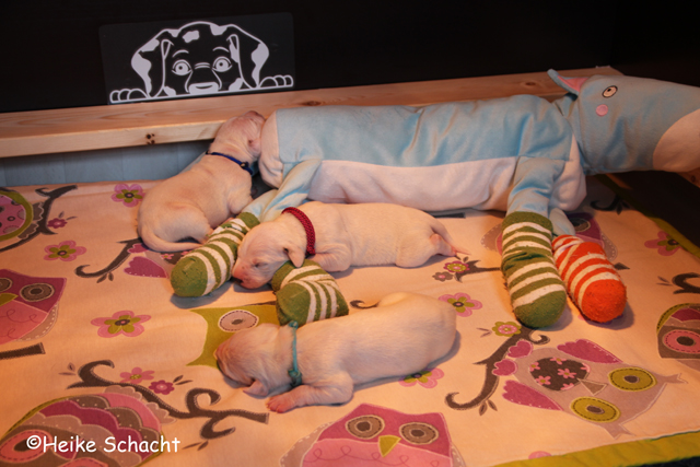 https://dalmatinerwelpen-haddonhall.blogspot.com/