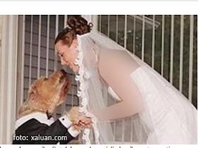 Emily Mabou dan Anjingya - Sekitar Dunia Unik