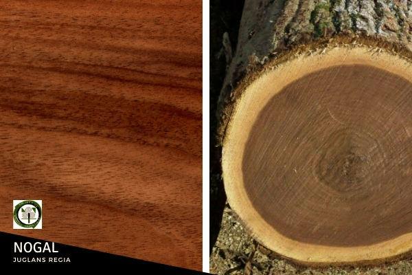 La madera del nogal es dura y homogénea, de color pardo-grisáceo, con vetas oscuras, se trabaja fácilmente