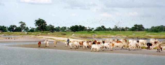 Tourisme, visite, réserve, île, oiseaux, Delta, Sine, Saloum, protection, environnement, nature, savane, marigot, mangrove, lagune, écosystème, LEUKSENEGAL, Dakar, Sénégal, Afrique