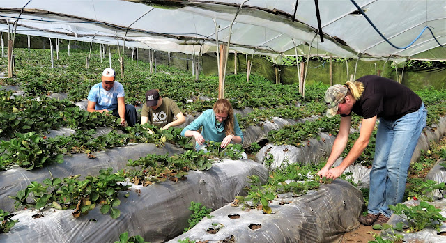 STAM students farming in Costa Rica.
