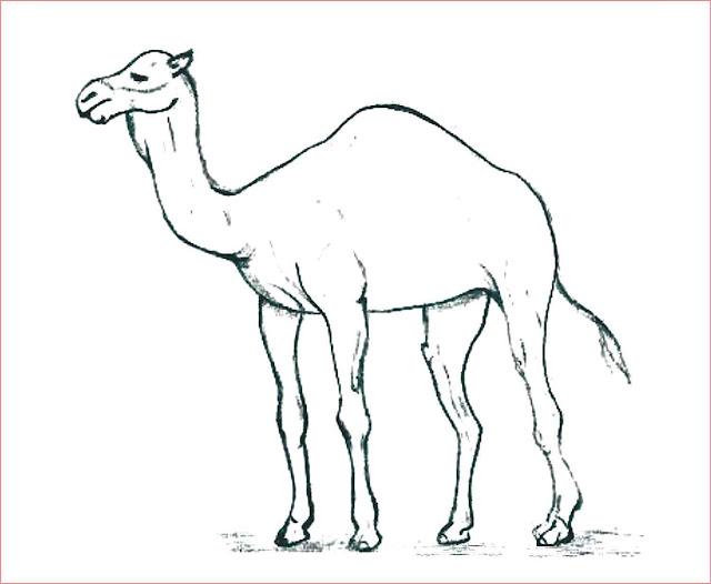 gambar-sketsa-hewan