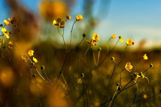 Thơ tình tháng 5, chùm thơ tháng về 5 xôn xao mùa nắng