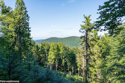 Jedna z widokowych przecinek leśnych
