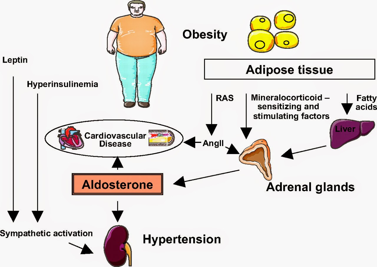 Kp 252 3 Obesitas Dan Hubungan Dengan Sindroma Metabolik 1490580215