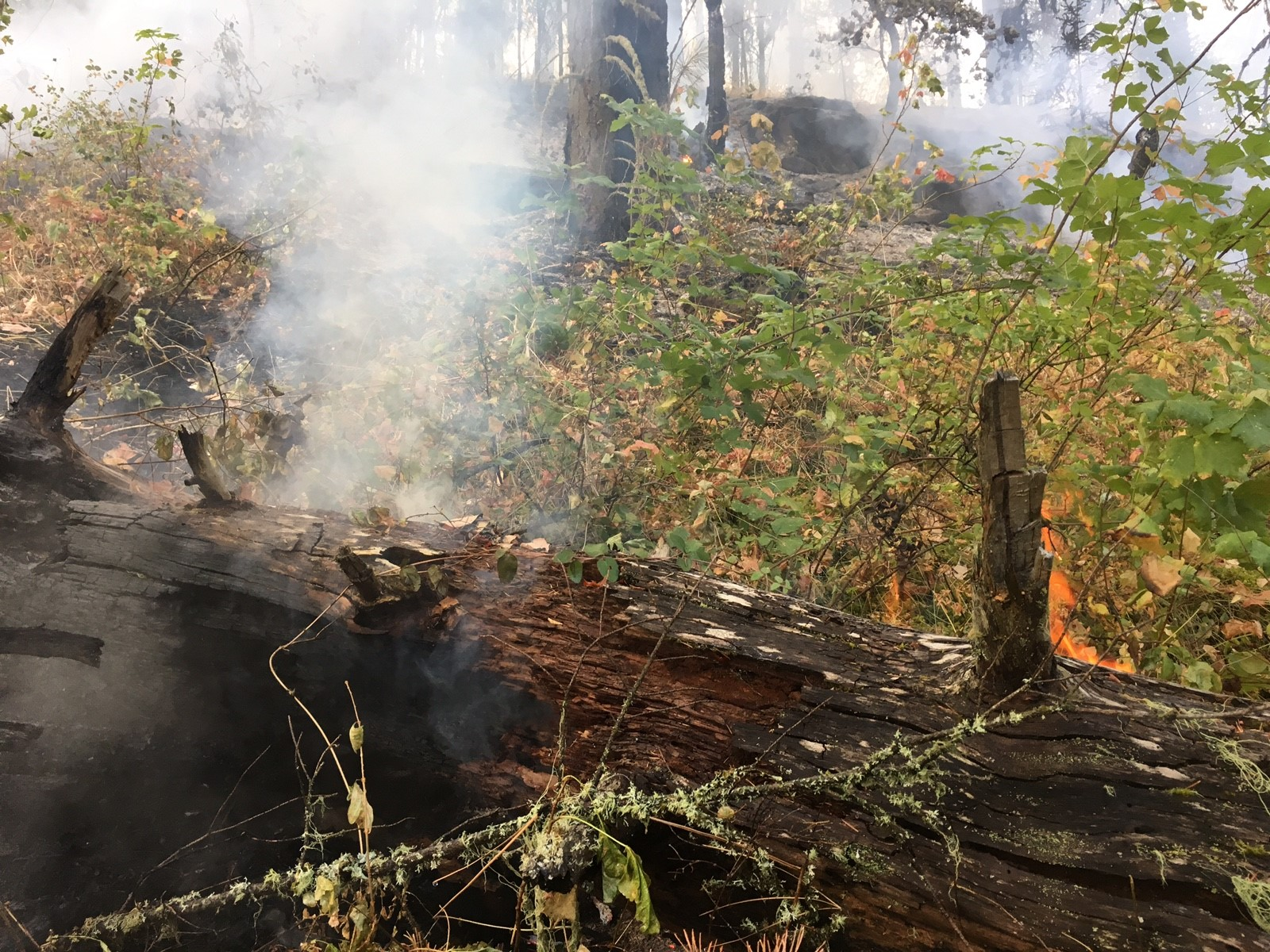 Of The Six Wildfires Located In The Past 12 Hours Five Of Them Are 100 Percent Lined And 100 Percent Mopped Up All Five Were Stopped At Less Than One Acre