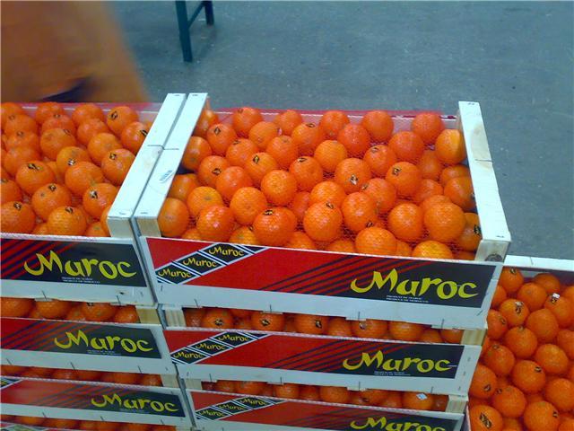 Les Etats-Unis rouvrent leur marché des agrumes au Maroc.