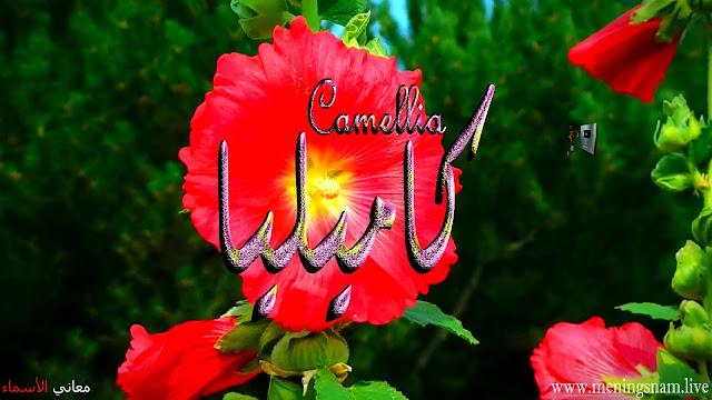 معنى اسم كاميليا وصفات حاملة هذا الاسم Camellia