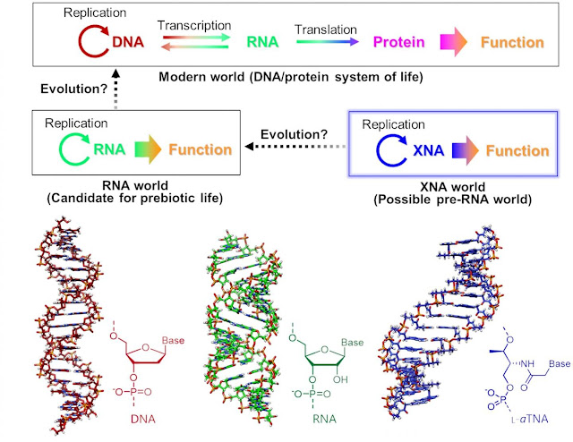 Origins of life could have started with DNA-like XNAs