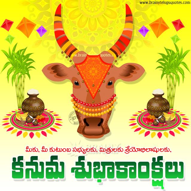 kanuma hd wallpapers, kanuma cow png images free download, kanuma greetings quotes in telugu
