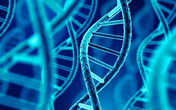 Examens Corrigés de Génétique SVI S4 PDF