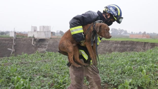 Rescatan a perritos atrapados en enorme socavón en México e internet aplaude a los héroes