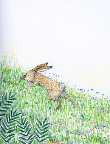 nap bunny illustration yara duttra