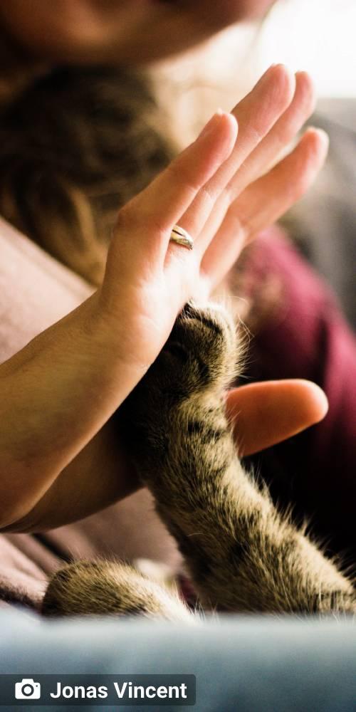 ambiente de leitura carlos romero thamara duarte amor aos bichos protecao animal adocao