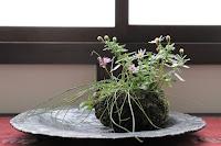 イトラッキョウとノギクの花が咲いている秋の草物盆栽