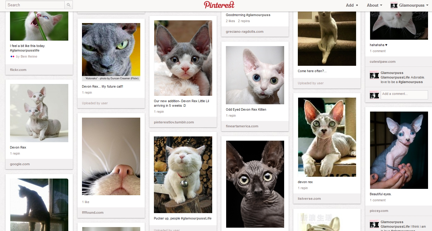 4e42e499e Kitty Kats by GlamourpussLife on Pinterest.