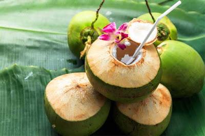 xuất khẩu trái dừa tươi