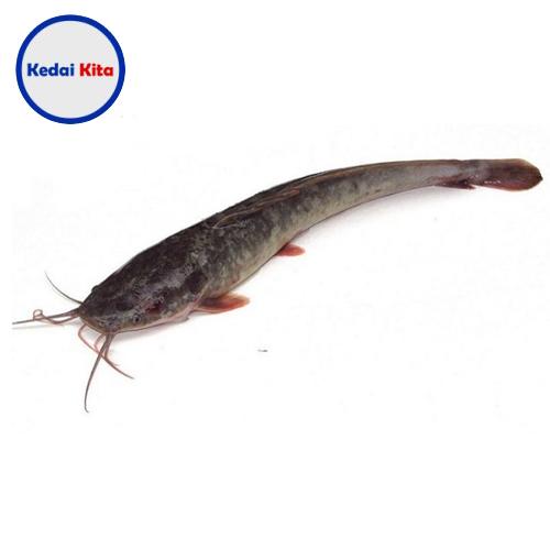 Ikan Lele 500 Gram