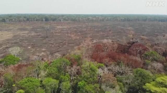 世界の失われた森林 30年で日本の面積の4倍以上に