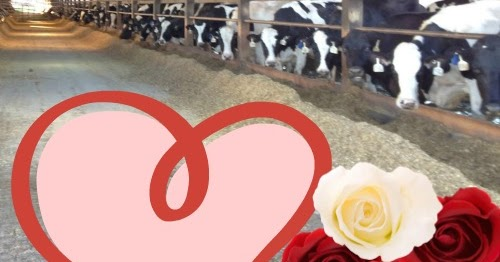 dating a farmer during harvest We love dating farmers harvest dating uk is especially for lovers of the countrysidewhether you're interested in dating farmers, a horse lover, dog lover or just enjoy walking in the great outdoors, harvest dating uk is the place to meet like-minded people.