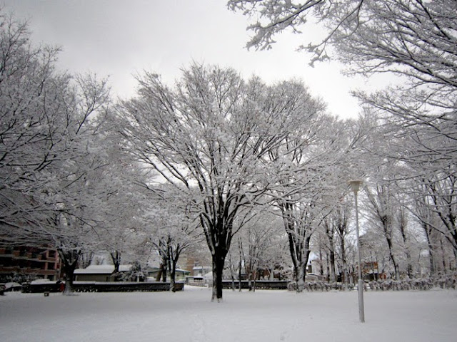 雪を被った大きな木