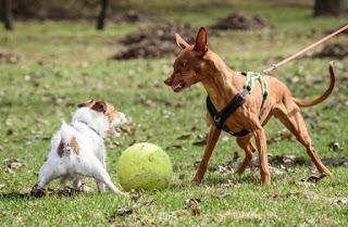 Educare il cane quando è aggressivo