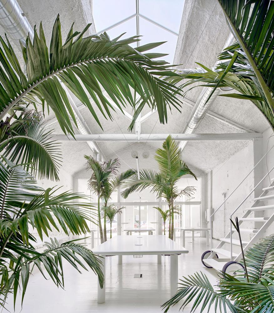Amplio espacio cultural totalmente blanco con altas palmeras