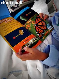 Libro para niños de oruga a mariposa de national geografic kids