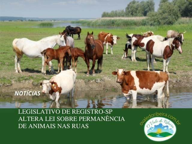Legislativo de Registro-SP altera Lei sobre permanência de animais nas ruas