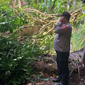 Pohon Duku Tumbang di Pengadegan, Satu Rumah Warga Rusak