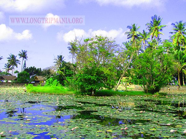 Lotus Lagoon Candidasa Tempat Wisata Instagramable Di Bali