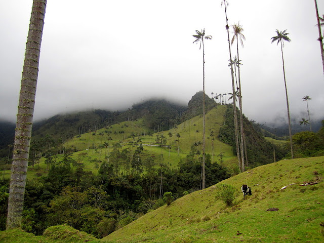 Valley of Cocora Colombia