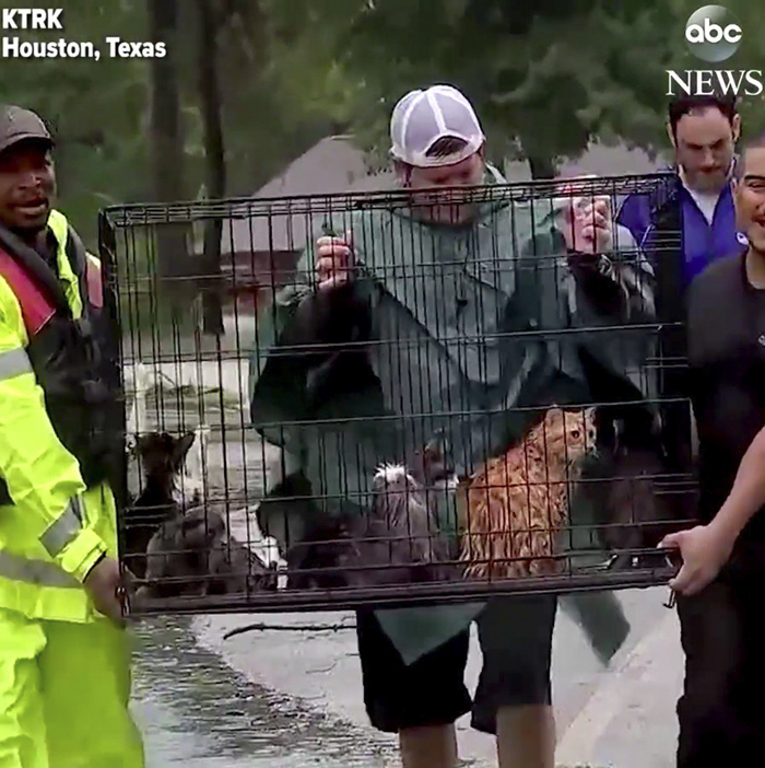 People Risked To Save Stranded Cats From Flood In Houston