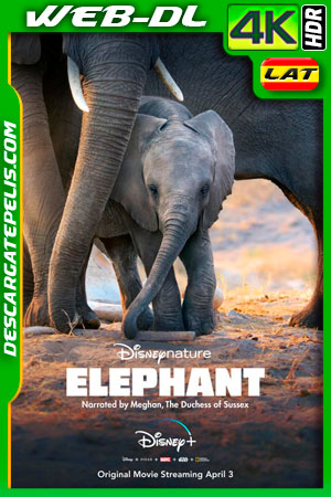 Elephant (2020) 4k WEB-DL HDR Latino – Ingles