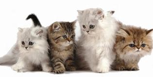 Tips Memelihara & Merawat Kucing