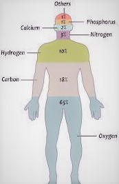 Interesting Facts About Chemical Composition of Human Body