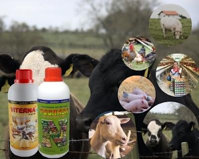paket peternakan nasa