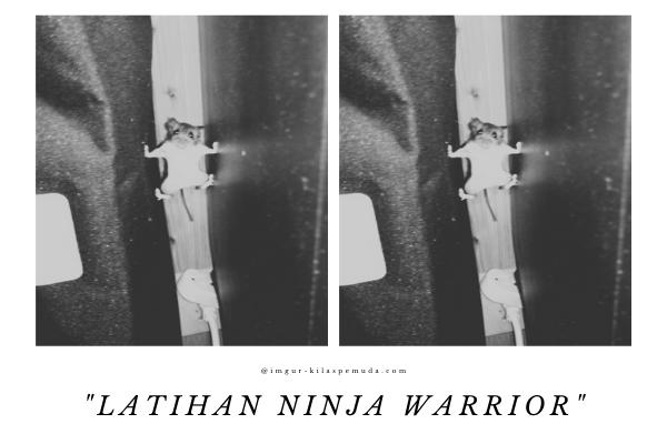 jadi  ninja