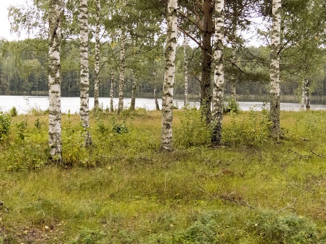 Trees at a rural rest stop on a Southeastern Finland roadtrip