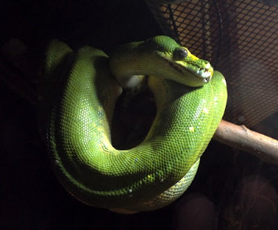 Amazing Snake Encounters At The Indianapolis Zoo